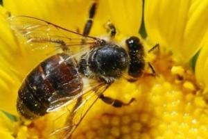 Alergolog: immunoterapia jadem może uratować życie