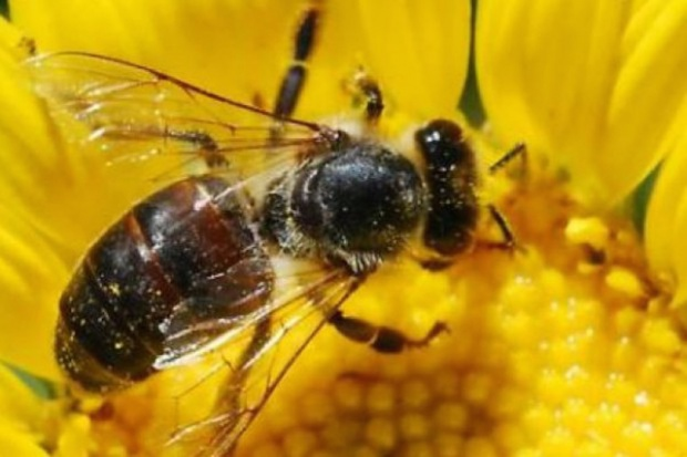Słowacja: cztery ofiary owadów