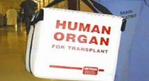 Badania: odkryto lepszy sposób przechowywania wątroby do przeszczepu