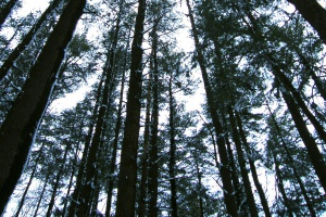 Alergolog: sroga zima opóźniła pylenie niektórych drzew