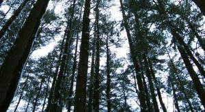 GIS będzie promować zdrowotne aspekty terenów zielonych