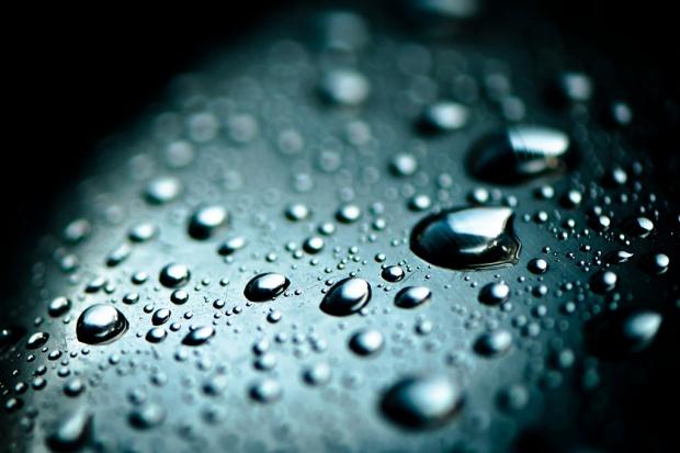 Małże monitorują jakość wody dla ponad 8 milionów osób