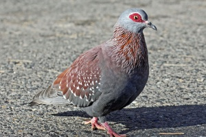 Ptaki pomagają uchronić się przed stresem, depresją i lękiem?
