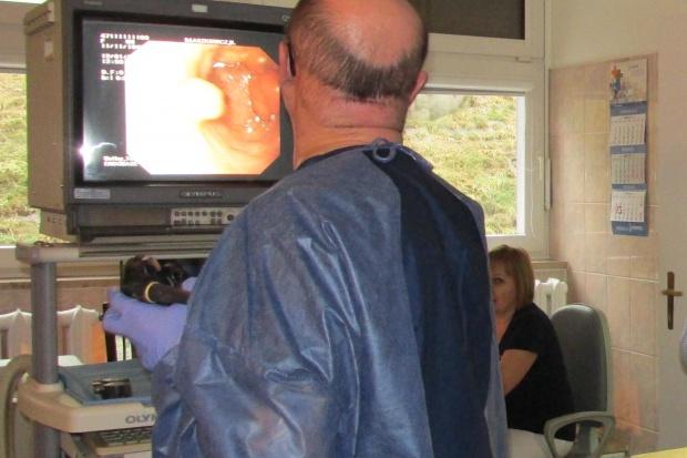Operacje endoskopowe mogą chronić przed stomią