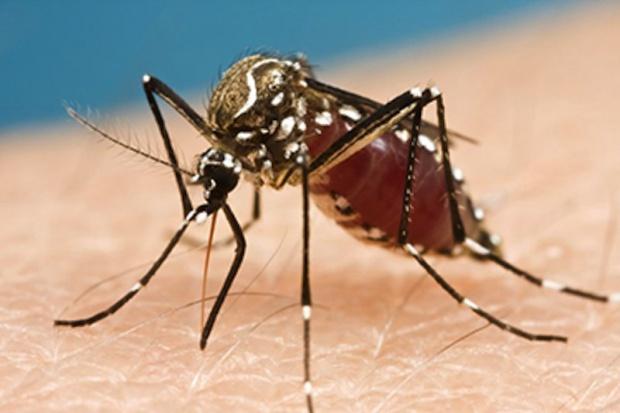 Komary nieprzypadkowo wybierają ofiary, są zaprogramowane
