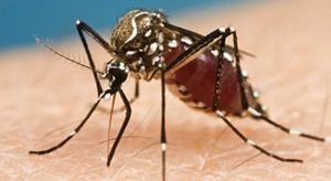 USA: pierwsze zakażenia wirusem Zika od żyjących tam komarów