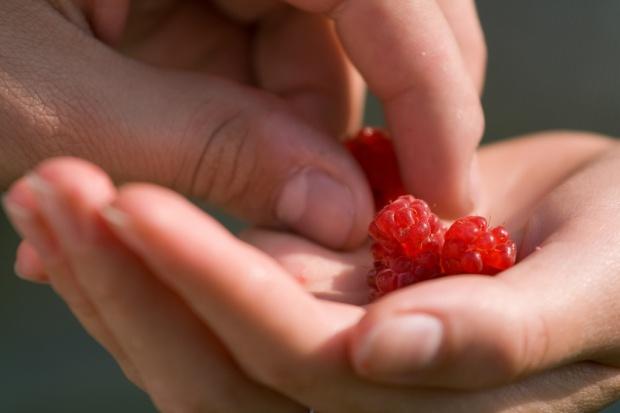 Do poczytania w Walentynki: miłość to chemia?