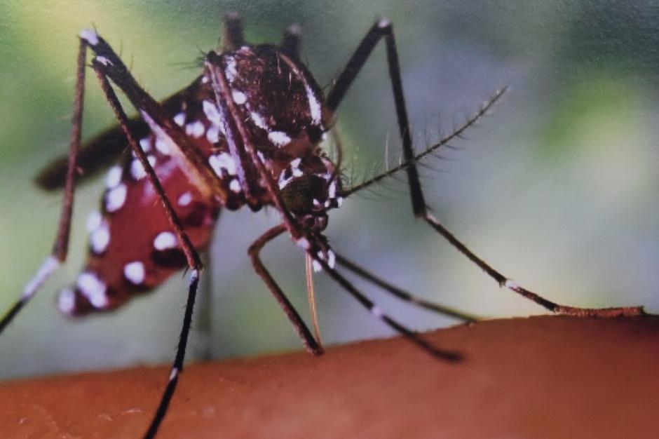 Czechy: śmiertelna ofiara gorączki Zachodniego Nilu