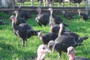 Dyrektor PIW: wirus grypy ptaków nie spowodował zachorowań u ludzi, ale należy zachować ostrożność