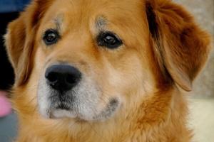 Wyprowadzanie psa skuteczną receptą na związany z wiekiem brak ruchu