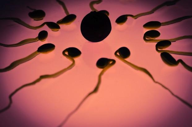 W ciągu 40 lat jakość męskiego nasienia spadła o połowę