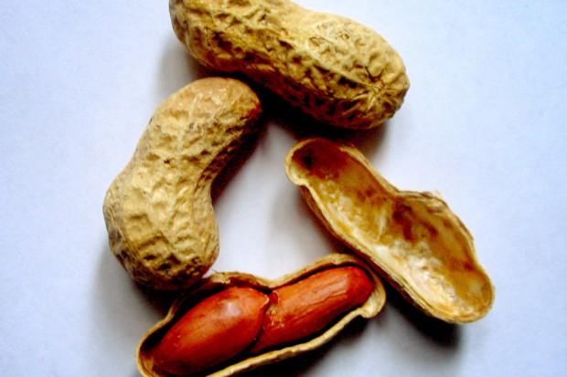 Naukowcy o skutecznym leczeniu alergii na orzeszki ziemne