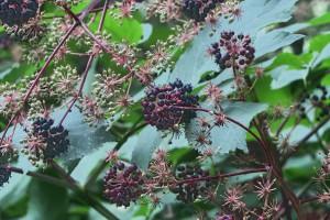 Profesor SGGW: ziołolecznictwo sprawdza się jako kuracja wspierająca