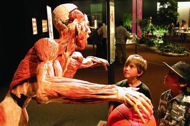 Do Poznania przyjedzie kontrowersyjna wystawa ciał poddanych plastynacji