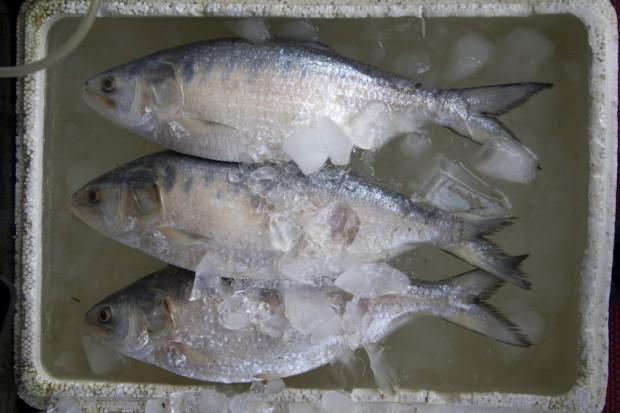 Kwasy omega 3 pochodzące z ryb skuteczniej chronią przed rakiem niż te z roślin