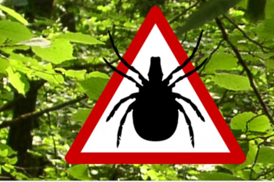 Katowice: chory na boreliozę domaga się oprysków przeciwko kleszczom. W tym roku ich nie będzie