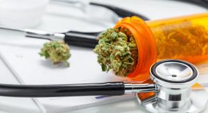 Medyczna marihuana dopiero czeka na transport do Polski