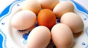 GIS ostrzega: pałeczki Salmonella Enteritidis na powierzchni skorupek jaj