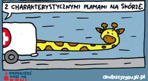 20 października to Dzień Mastocytozy: zmiany skórne u chorych przypominają umaszczenie żyrafy