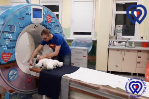 Radiolog z Matki Polki zrobił misiowi i kurczakowi RTG, rezonans i tomografię