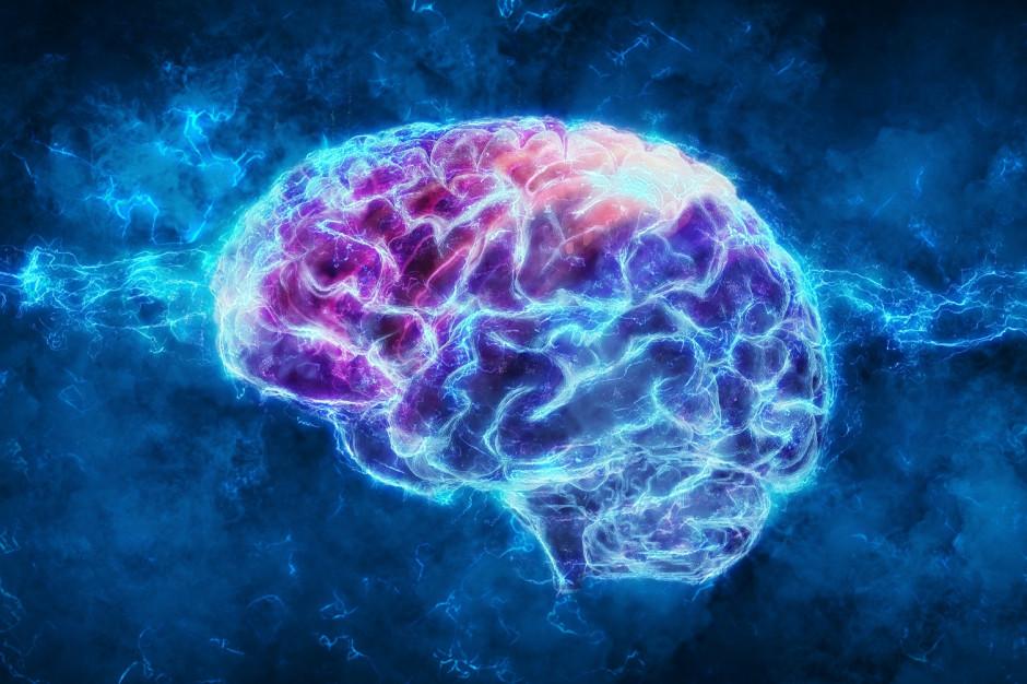 Specjaliści z Google i Harvarda odtworzyli w komputerze strukturę 1 mm kory mózgowej